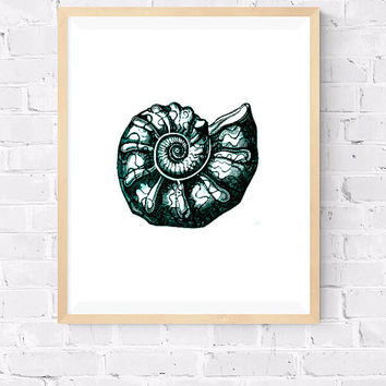 Molluscs Printable, Ammonite Decorative art, Sea life print, Marine sea life, Beach House decor, Molluscs Poster, Modern Art, 8x10, 24x30