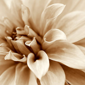 Flower photography nature photography floral wall decor monochrome wall art beige brown dahlia photo print decor botanical wall decor
