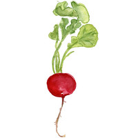 Small Radish number three print of original watercolor painting, red and green, Botanical painting, Kitchen art, minimalist, farmers market