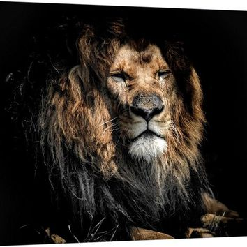 Old Aged Lion Canvas Wall Art Print