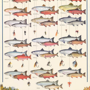 Fly Fishing Trout Salmon Char Poster 27x38