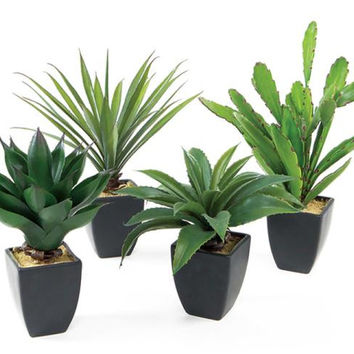 4 Succulent Plants - Artificial