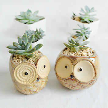 Owl Ceramic Succulent Planter -Cartoon Porcelain Cacti Pot-Kids Gift-Home Decoration