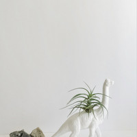 White Dino Air Plant, Dino Planter