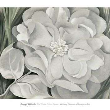 The White Calico Flower, c.1931 Art Print by Georgia O'Keeffe at Art.com