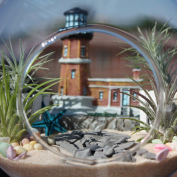 Lighthouse - Relaxing Assortment of Funkiana and Guatemala Air Plants in Footed Terrarium w/Lighthouse Building