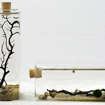 Marimo Terrarium - Rectangle glass vase with cork stopper -  Moss Ball Aquarium  - sea fan - shells