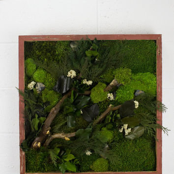 Tree Branches - Water free green wall art, moss and preserved plants - Vertical garden wall decor - Rustic Frame