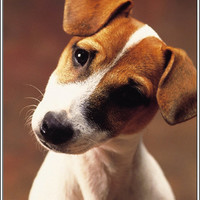 Set of 4 Dog Puppy Jack Russell Terrier Stationery Greeting Notecards / Envelopes