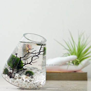 Marimo Terrarium - Rolling Vase - Large - Japanese Moss Ball aquarium - White - Desk Accessory - Green Gift