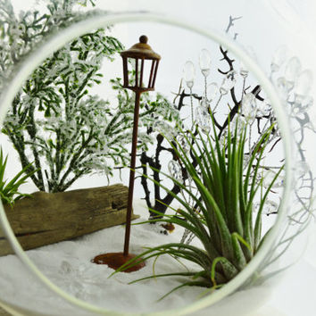 "Wintery Narnia Terrarium with Snow White Sand and the Lamp Post ~ Airplants - 7"" Glass Round Globe ~ Magical ~ Gift ~ Ages 3 - 103"