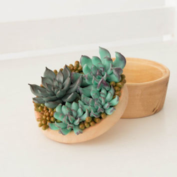 Large Blue Succulent Planter Accessory Jewelry Box Wooden Round Decorated Ring Holder Case Wedding Bridal Birthday Gift Decor Decoration