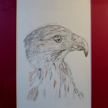 Booted Eagle Original Pencil Drawing with coloured mount  - Title Aquila Pennata
