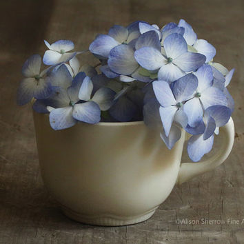 Kitchen Photography, Rustic Home Decor, Farmhouse Chic Teacup Art Print |'Hydrangea Tea'