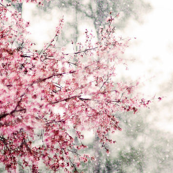 Cherry Blossom Print, Sakura Photo, Pink Snow Flower, Nature Photography Wall Art, 8x10 Home Decor, Metallic