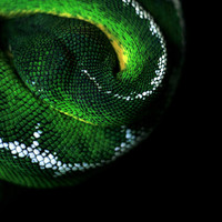 Green Snake Art Print by Jessica Yakamna