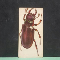 Vintage Stag Beetle Insect Flash Card Color Illustration Paper Ephemera Art Decor Nature Bug Collage Crafts Supply
