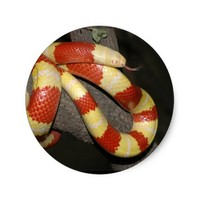 Milk snake classic round sticker
