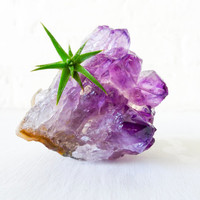 Amethyst Air Plant Garden - Chunky Druze Points - Spikey Plant - Mineral Stone Terrarium - Naturalist Gardener Springtime Fun Gifts