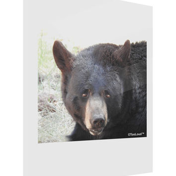 Staring Black Bear Gloss Poster Print Portrait - Choose Size