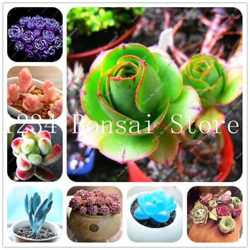 100 pcs Succulent bonsai Rare Lithops plants Bonsai Flower plants Cactus DIY Plant Potted Indoor Plants Flowers For Home Garden