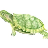 Turtle Watercolor Painting - 5 x 7 - Giclee Print - Animal Painting Wall Art