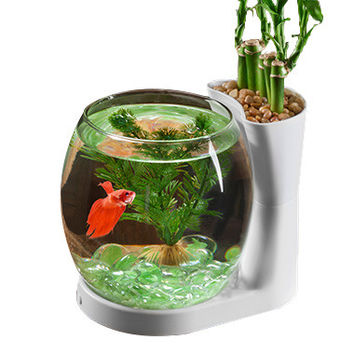 Betta Fish Bowl & Planter Desktop Tank .75 gal White