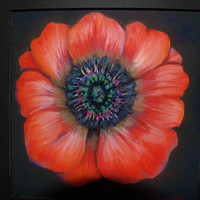 Fine Art Giclee Print, Red Poppy, Pastel Painting, Red Flower, flower Portrait