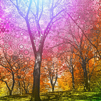 Rainbow Trees ... 16x20 gallery wrap canvas