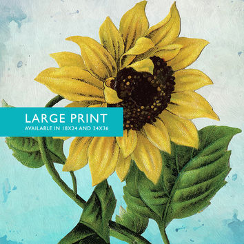 Sunflower Print Set of Two Sunflowers art botanical print flower kitchen decor floral print floral wall decor Sunflower wall art