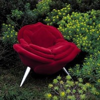 Edra Rose Armchair, Modern Armchairs   Contemporary Arm Chairs   SwitchModern