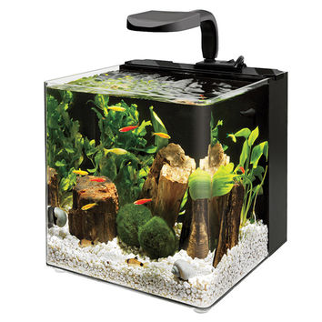 Aqueon 4 Gallon Evolve Aquarium Bowl kit