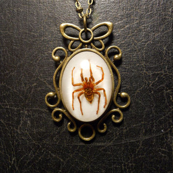 Butterfly Frame Spider Specimen in Resin Cameo by TheCuriositeer