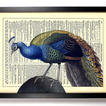 Handsome Peacock, Vintage Animal Plate, Nature Bird, Eco Friendly Home Decor Buy 2 Get 1 FREE