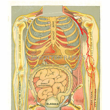 1919 Female Anatomy Print - Layered - Dimensional - FULL COLOR Litho - RARE - Reproductive System
