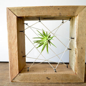 Rustic Reclaimed Recycled salvaged wood AIR PLANT holders. Vase, wall decor, geometric design, terrarium wedding Christmas gift