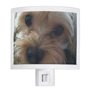 Cute Yorkie, Yorkshire Terrier, Night Light