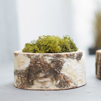 "Natural Birch Forest Bowl Planter - 2"" Tall x 5"" Wide"