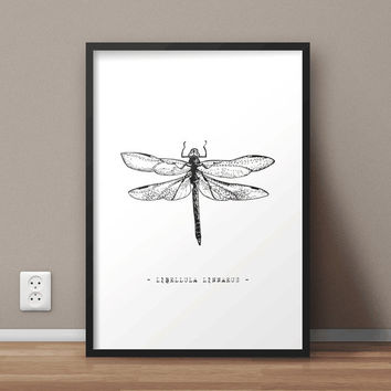 Libellula Linnaeus Printable Wall Art | Dragonfly Print | Insects Print | Large print 50x70 cm