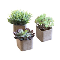 Desert Flora Potted Plants - Set of 3
