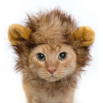 HAPPIERPETS Halloween Hot Funny Pet Hat Costume Lion Mane Cat Wig Small Dogs  Dress Up With Ears
