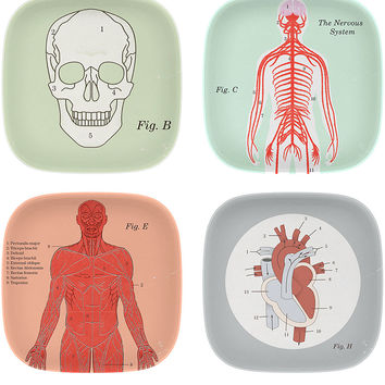 X-Ray Anatomy Bamboo Fibre Mini Trays Set