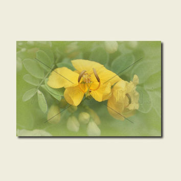 Yellow Floral Canvas Art. Flower Canvas Nature Art For Bathroom. Yellow Nature Photography. Australian Sellers. Anthotype Process