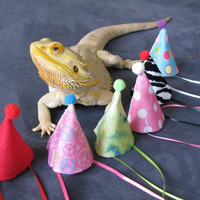 Handmade Felt Bearded Dragon Birthday Hats!