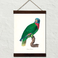 Vintage French Parrot No. 3 Canvas Wall Hanging