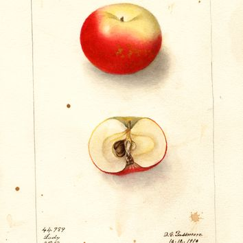 Apples, Lady (1910)