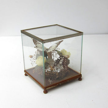 Vintage mid century butterfly specimen glass and steel diorama