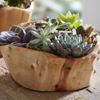 Succulent Garden in Root Bowl