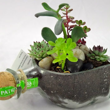 Patron Tequila Bottle Garden Succulent Planter - Bottle Only