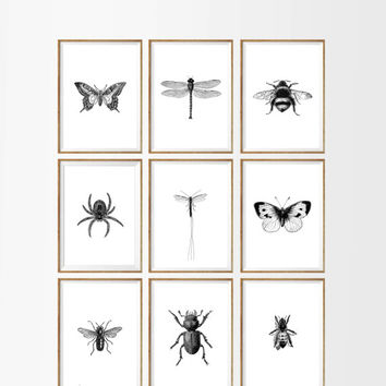 Bugs and Insects Art Print SET of 9. UNFRAMED A4. minimalist insect, insect poster, insect illustration, insect wall art, entomological art
